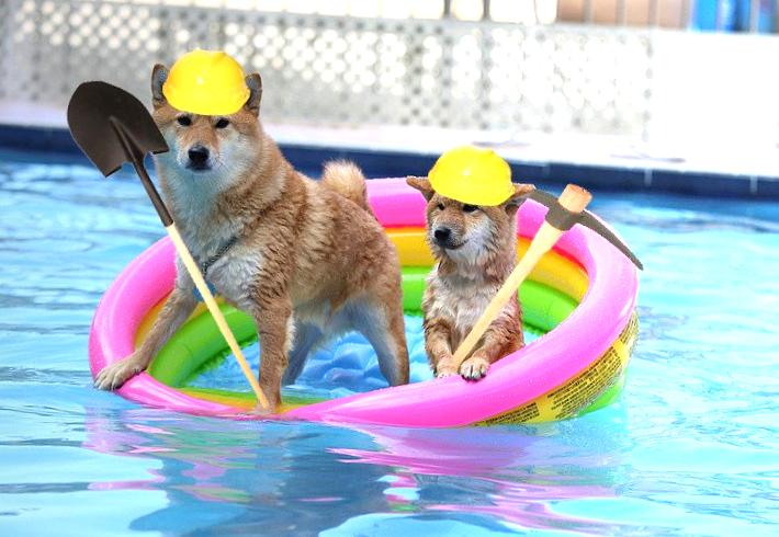pool-mining-dogecoin